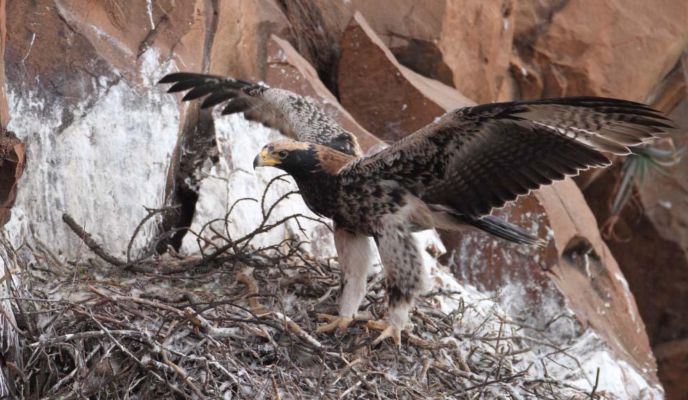 Eaglet 91 days