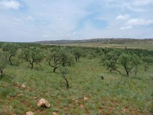 PCA Landscape